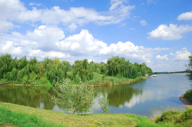 Blue lake and sky with willows on the bank stock images