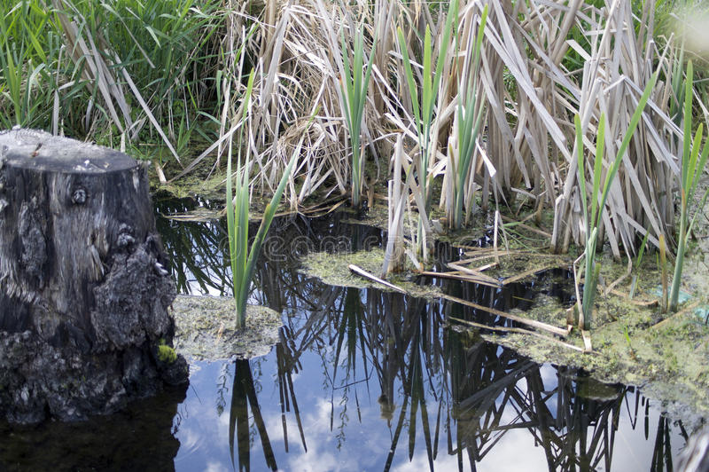 Download Blue Lake Water Green Grass Stock Photo - Image of blue, river: 42892584