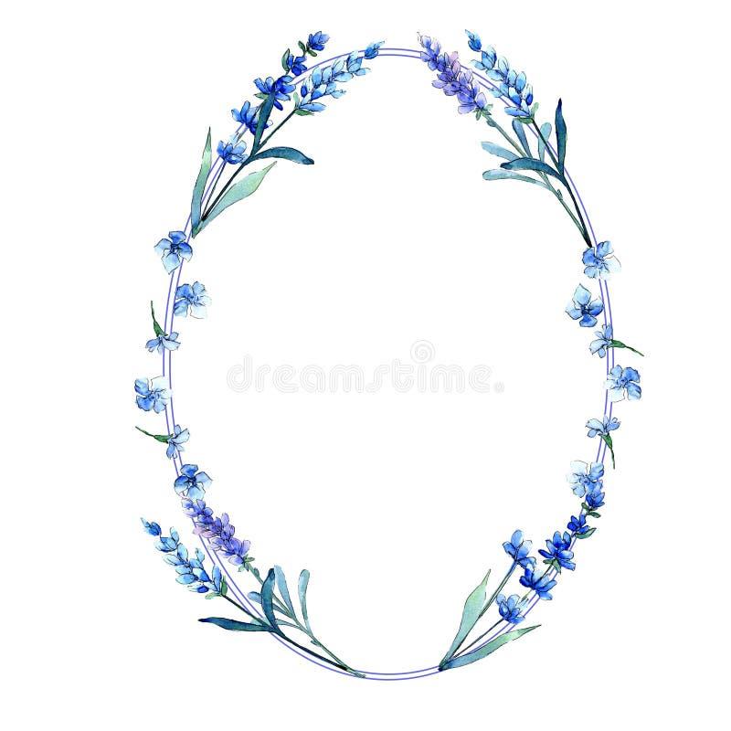 Blue lavender. Floral botanical flower. Wild spring leaf wildflower frame in a watercolor style. vector illustration