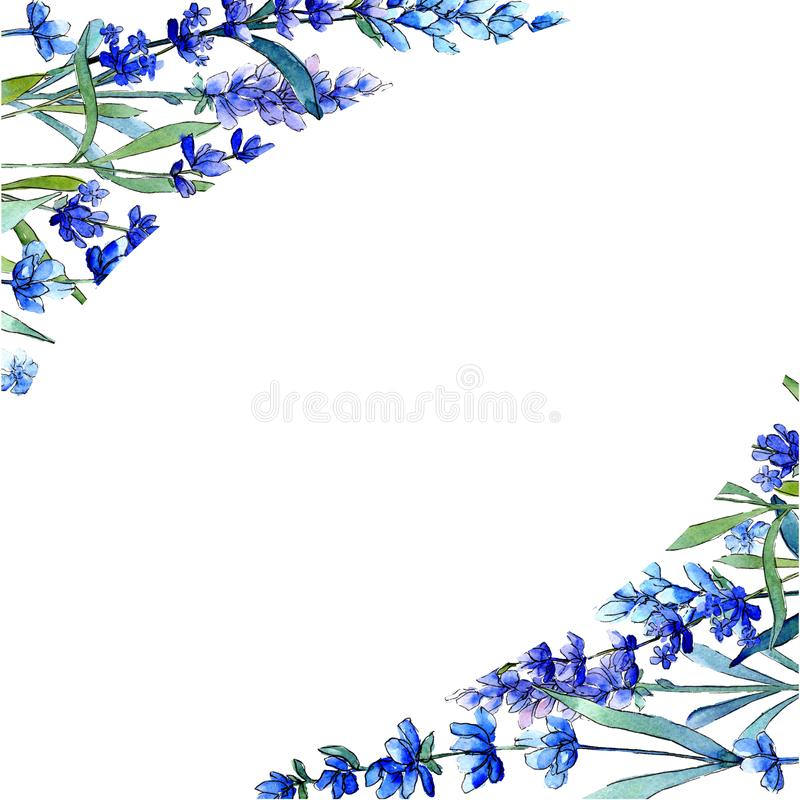 Blue lavender. Floral botanical flower. Wild spring leaf wildflower frame in a watercolor style. Aquarelle wildflower for background, texture, wrapper pattern vector illustration
