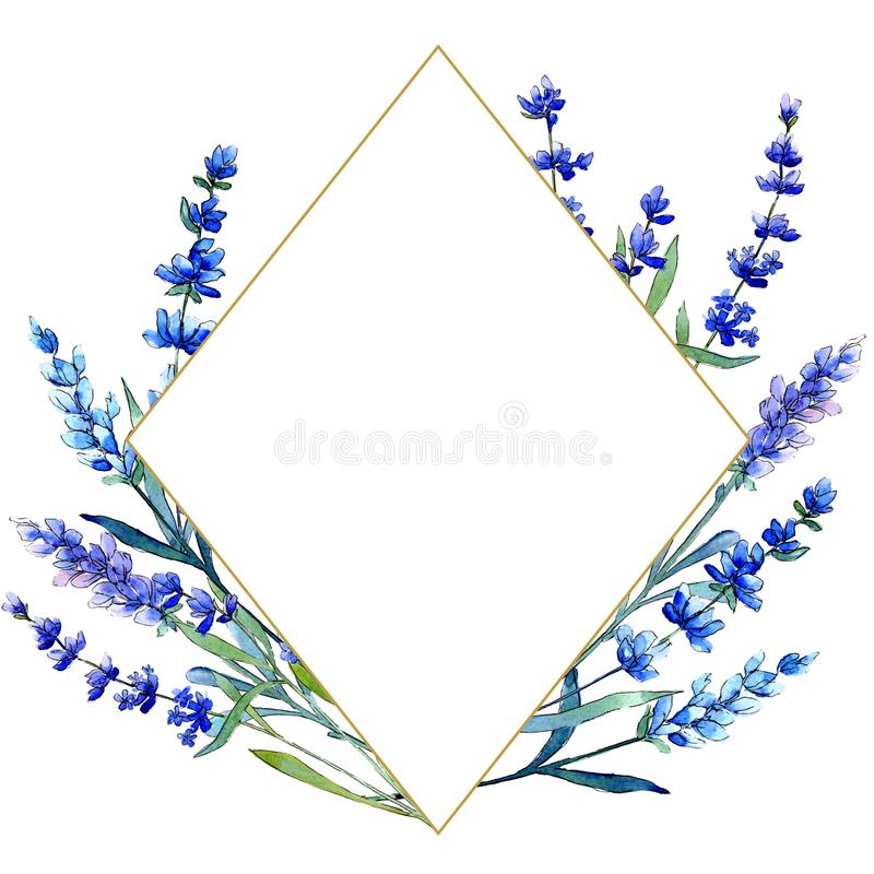 Blue lavender. Floral botanical flower. Wild spring leaf wildflower frame in a watercolor style. Aquarelle wildflower for background, texture, wrapper pattern royalty free illustration