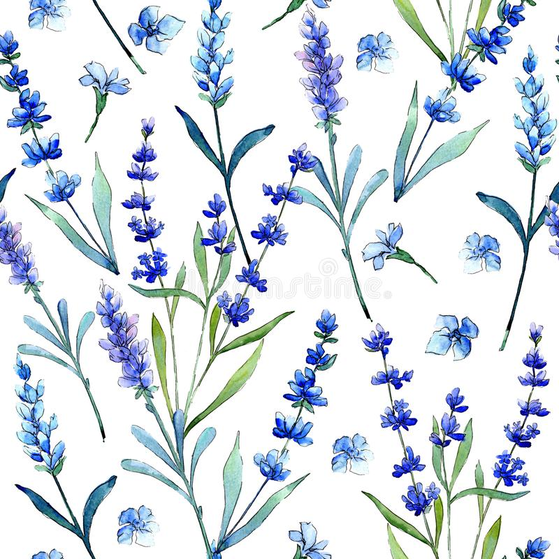 Blue lavender. Floral botanical flower. Wild spring leaf wildflower pattern in a watercolor style. Aquarelle wildflower for background, texture, wrapper vector illustration