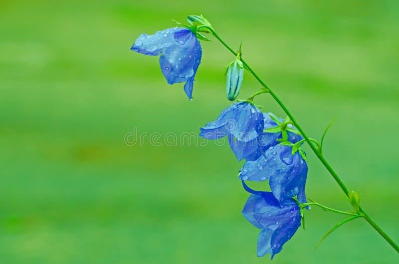 Blue, Leaf, Flora, Flower royalty free stock photos