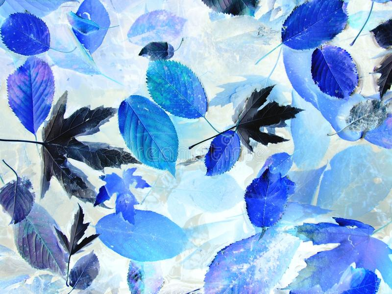 Blue leaves. Photo of many leaves with colors changed into blue shades royalty free stock image