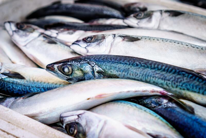 Blue and Light Grey Long Fish stock photo