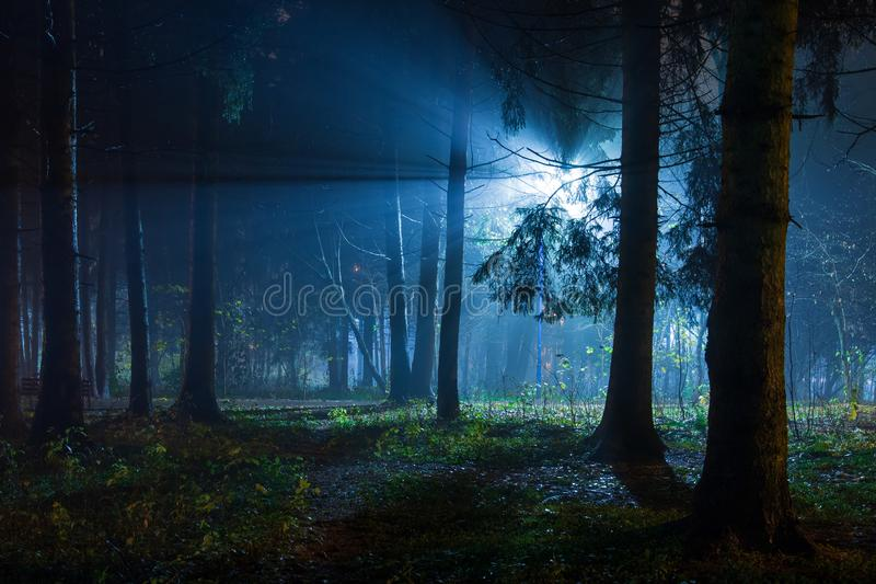Blue light from lantern in night forest park royalty free stock photography
