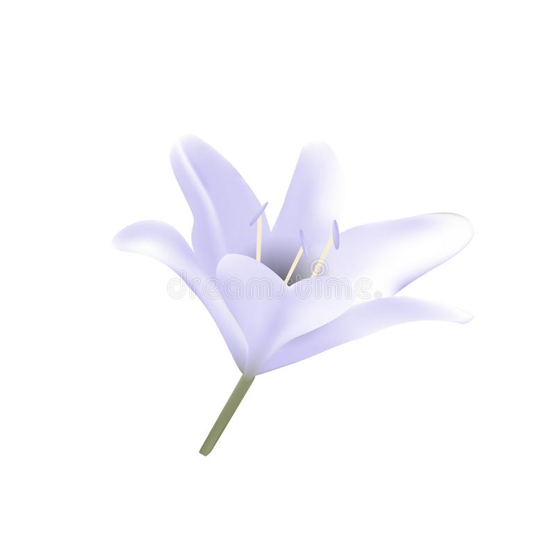 Blue lily. stock illustration