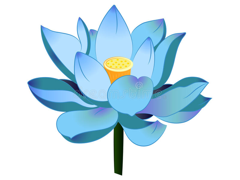 blue lotus vector illustration clipart stock image illustration of rh dreamstime com water lily pond clipart water lily pond clipart