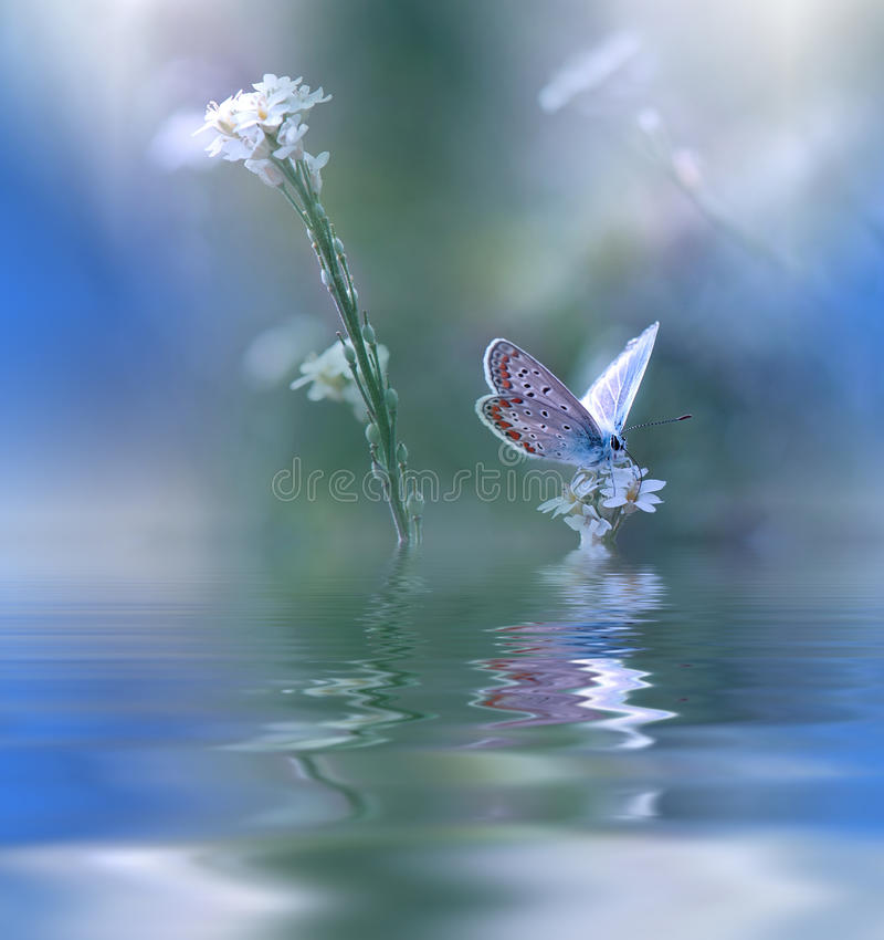 Blue Magic butterfly over water and wildflowers.Amazing Beautiful Nature Background.Colorful Blue Wallpaper.Colors,art,spa.Water. royalty free stock images