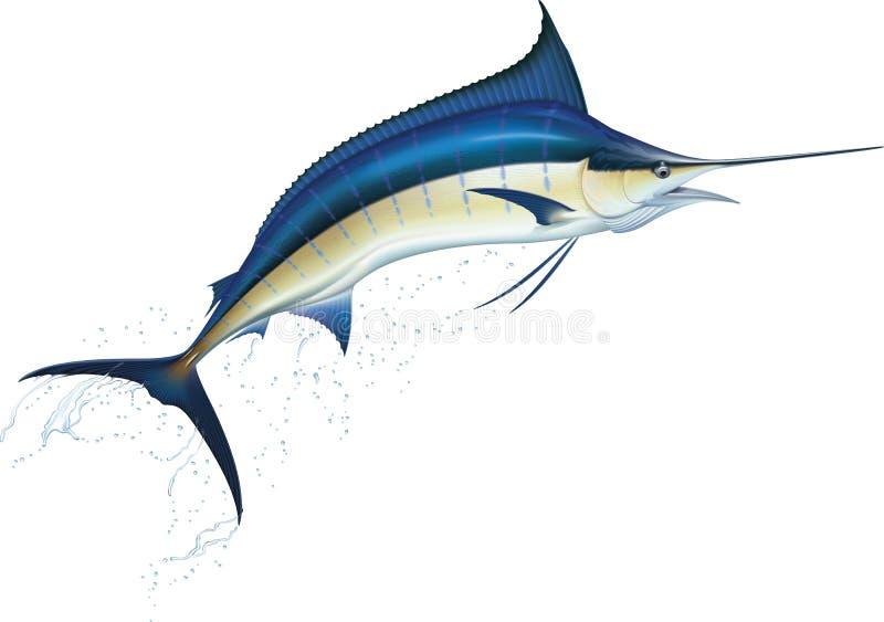 Blue marlin. Jumping blue marlin. Realistic vector illustration