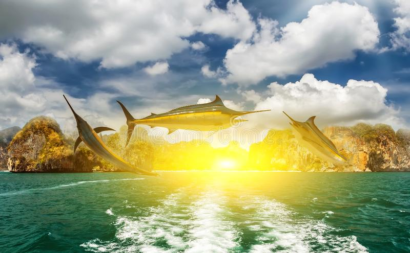 Blue Marlin fish sun. Fishing blue Marlin fish boat wake sun paradise tropical island royalty free stock photos