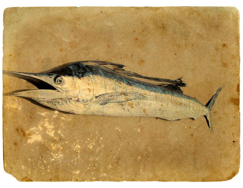 Download Blue Marlin Fish (sword Fish) On The Sand. Stock Illustration - Illustration of frayed, ocean: 22891055