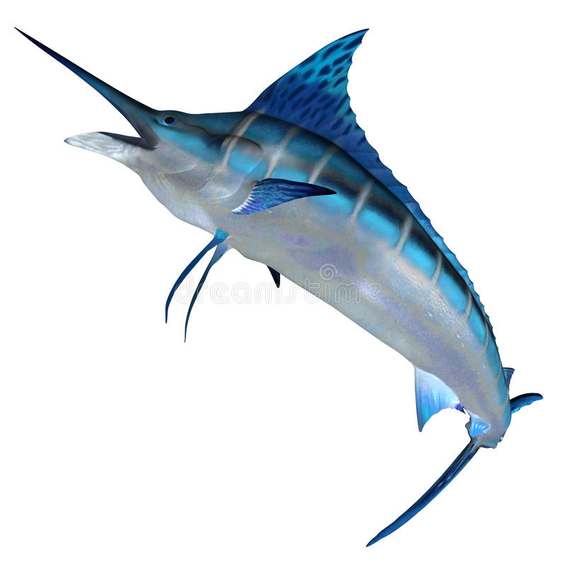 Blue Marlin Front Profile royalty free illustration