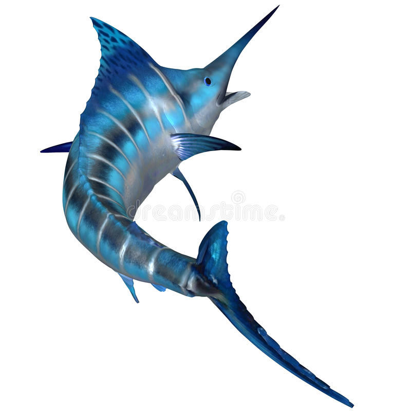 Blue Marlin Predator. The Blue Marlin is a predator and a favorite game fish of deep sea anglers royalty free illustration