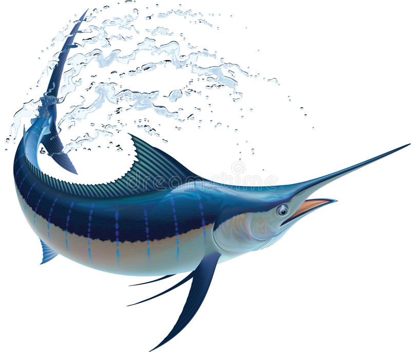 Blue Marlin. Swinging in water sprays. Realistic vector illustration. Isolated on white background