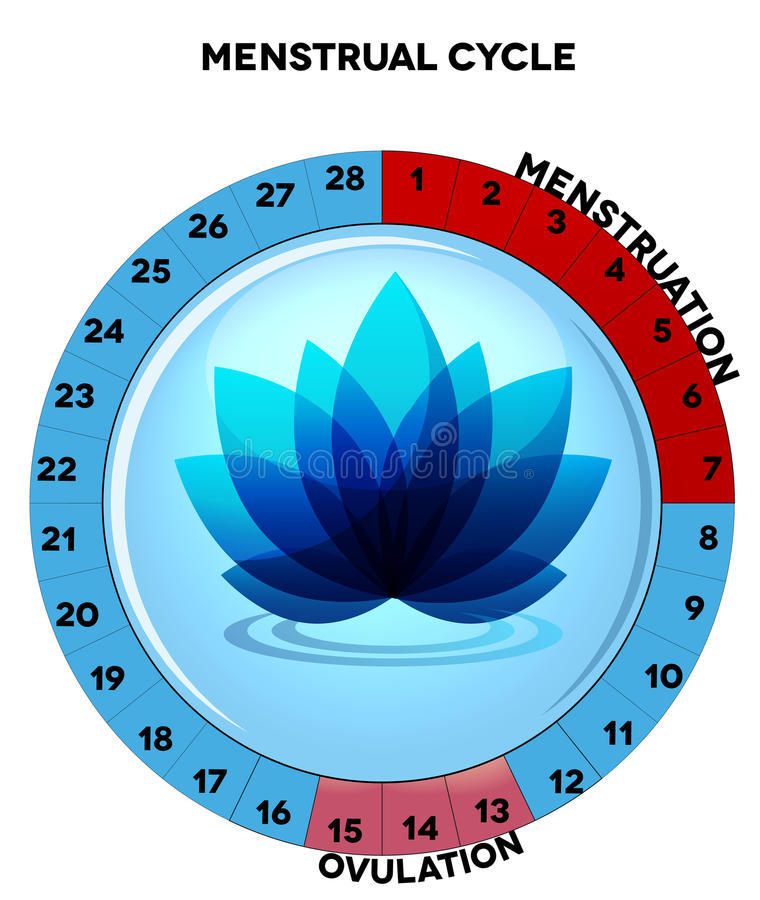 Blue menstrual cycle chart with flower royalty free illustration