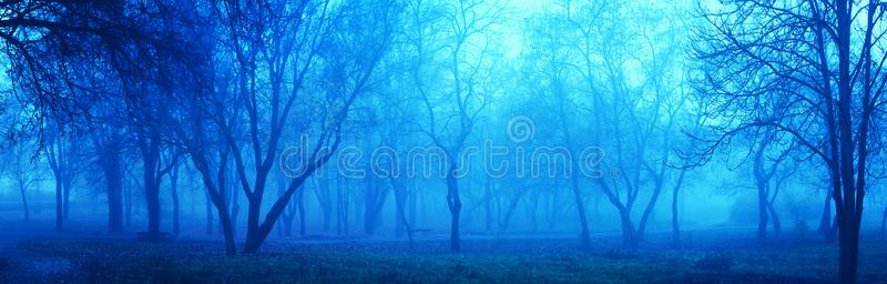 Blue mist night in park. Beautiful dusk nature landscape. Blue colors. Panorama view stock photography