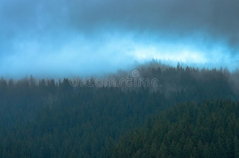 Blue mist over pine trees in the forest in the mountains. Carpathians Ukraine stock image