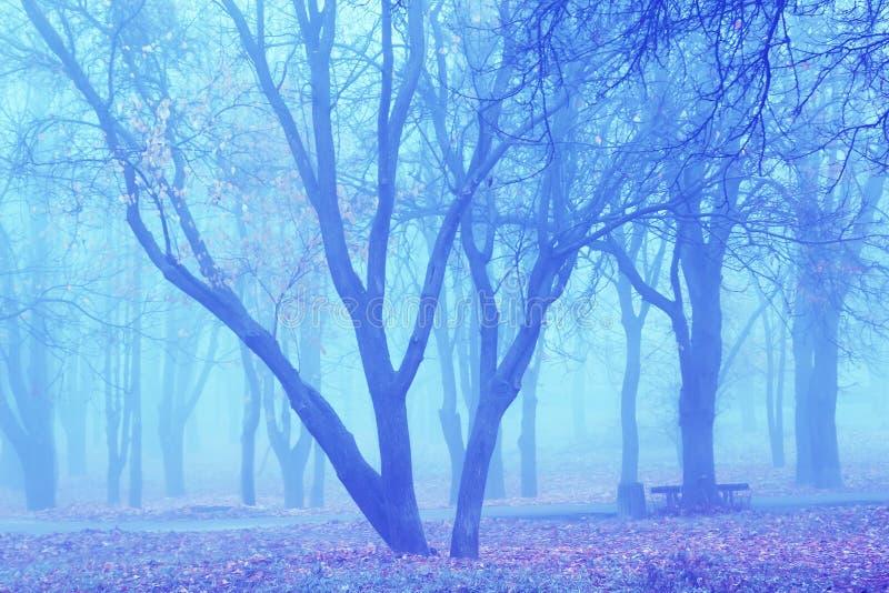 Blue mist in park stock photo