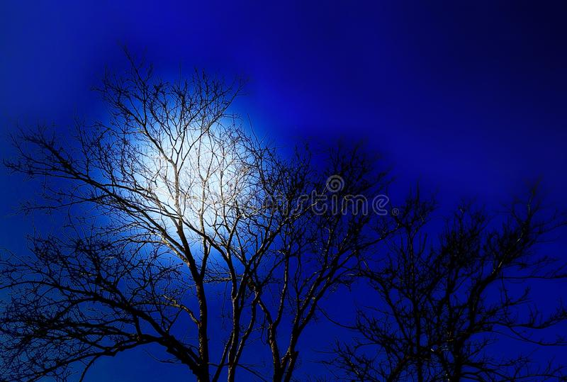 Blue moon light silhouette tree at night royalty free stock images
