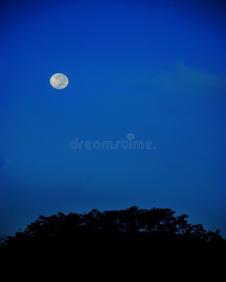 Blue Moon in night scene. Full Blue Moon in night scene royalty free stock photography