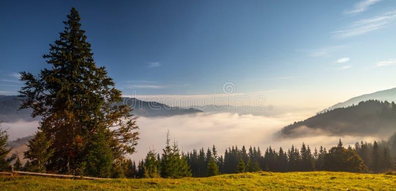 Blue Mountains Panorama royalty free stock photos