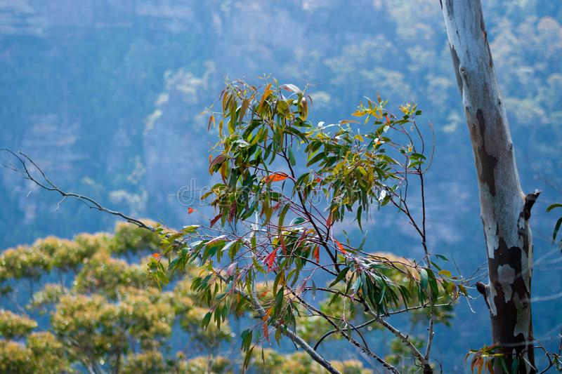 The Blue Mountains, Sydney royalty free stock images