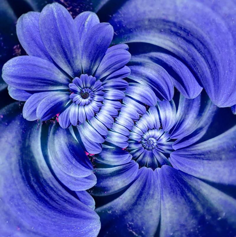 Blue navy camomile daisy flower double spiral petals abstract fractal effect pattern background. Floral spiral abstract pattern. Fractal. Incredible blue stock images