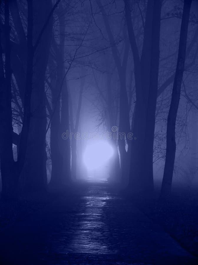 Blue night royalty free stock image