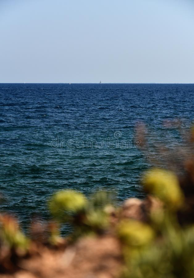 Blue ocean view with blurry stonecrops in front royalty free stock photos