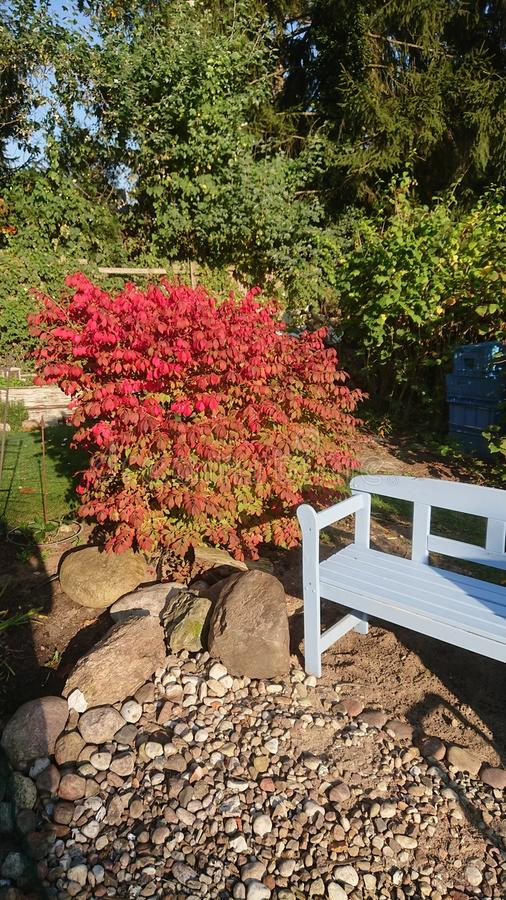 Blue parkbench Late summer fall stock photography