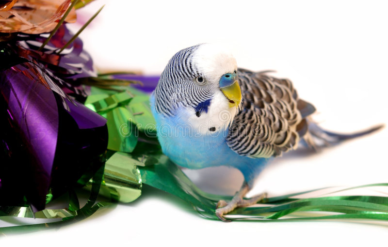 Download Blue Parrot And Tinsel From Foil. Stock Image - Image: 7185551