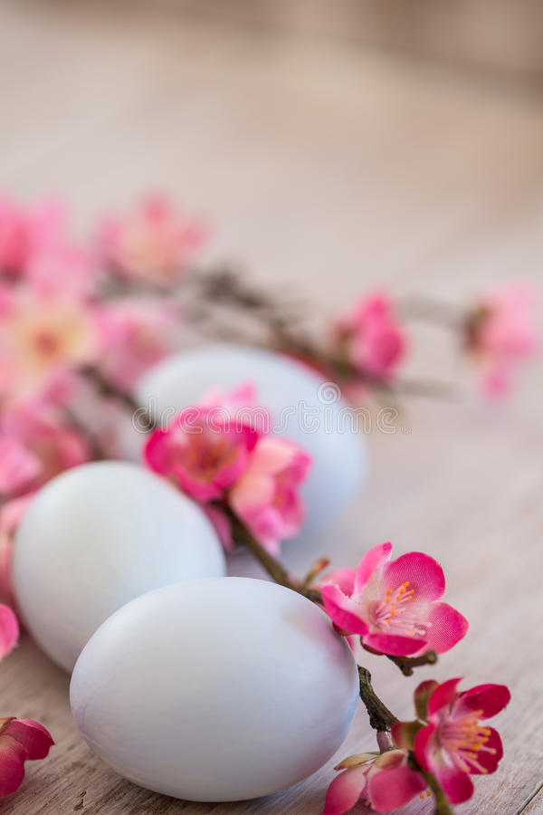 Blue Pastel Colored Easter Eggs and Cherry Blossoms on White Woo. Pastel blue Easter eggs and Cherry Blossoms on white wood background royalty free stock images