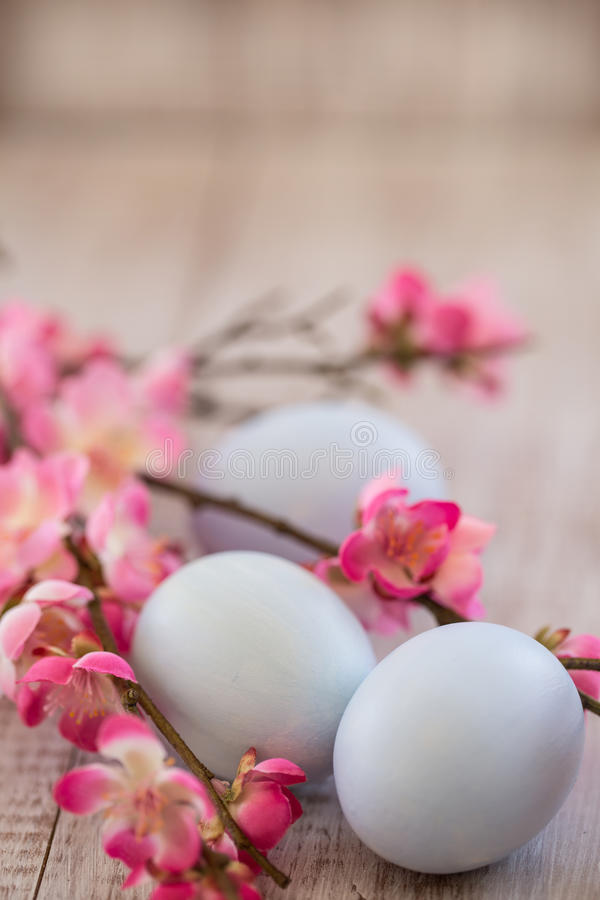 Blue Pastel Easter Eggs and Cherry Blossom Branches on White Woo. Pastel blue Easter eggs and Cherry Blossoms on white wood background stock photography