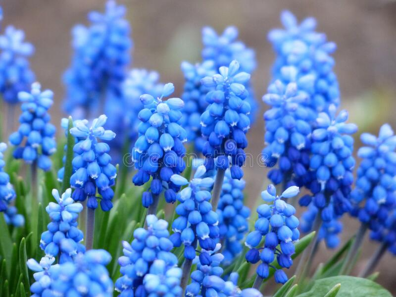 Blue Petaled Flower With Green Leaf Free Public Domain Cc0 Image