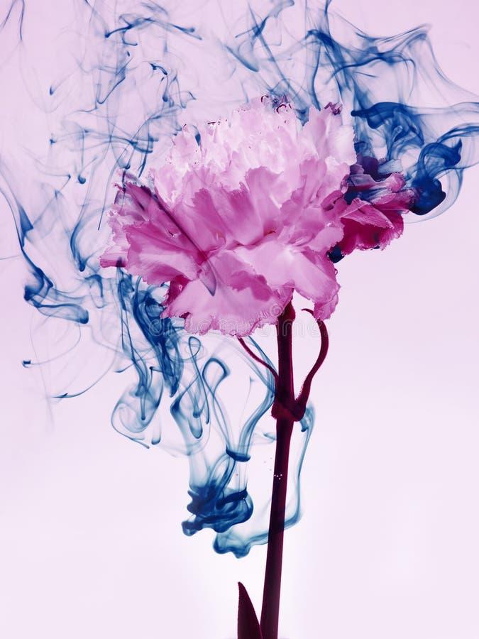 Blue pink inside water white background flowers under paints indigo smoke steam blur green stock images