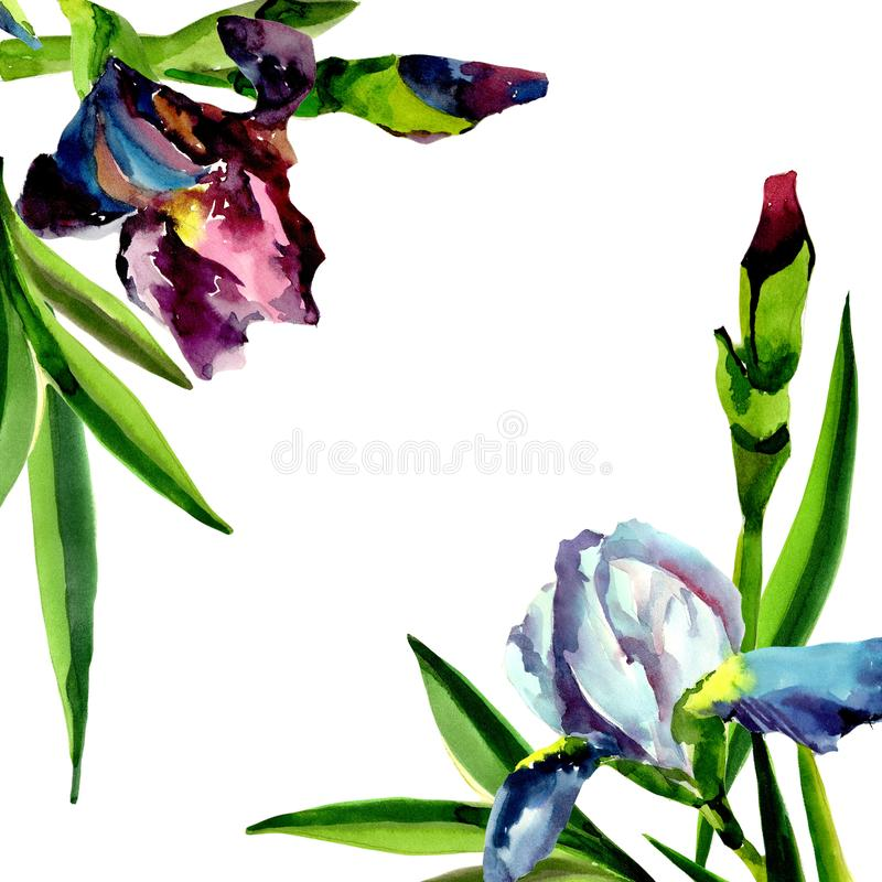 Blue and pink irises. Floral botanical flower. Frame border ornament square. Aquarelle wildflower for background, texture, wrapper pattern, frame or border royalty free illustration