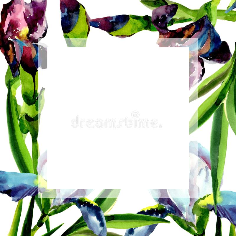 Blue and pink irises. Floral botanical flower. Frame border ornament square. Aquarelle wildflower for background, texture, wrapper pattern, frame or border vector illustration