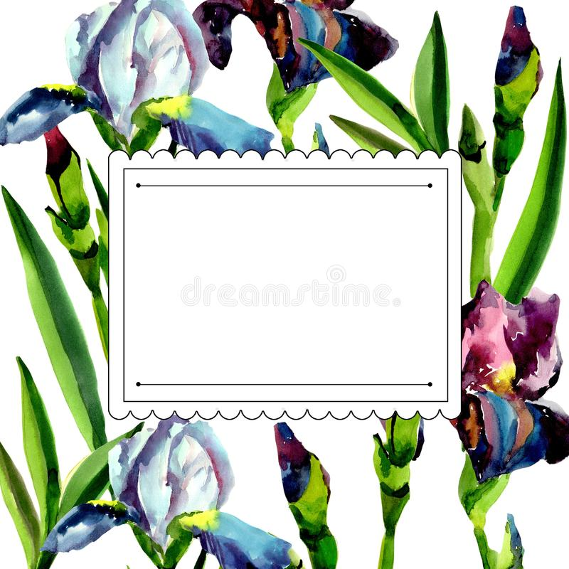 Blue and pink irises. Floral botanical flower. Frame border ornament square. Aquarelle wildflower for background, texture, wrapper pattern, frame or border stock illustration