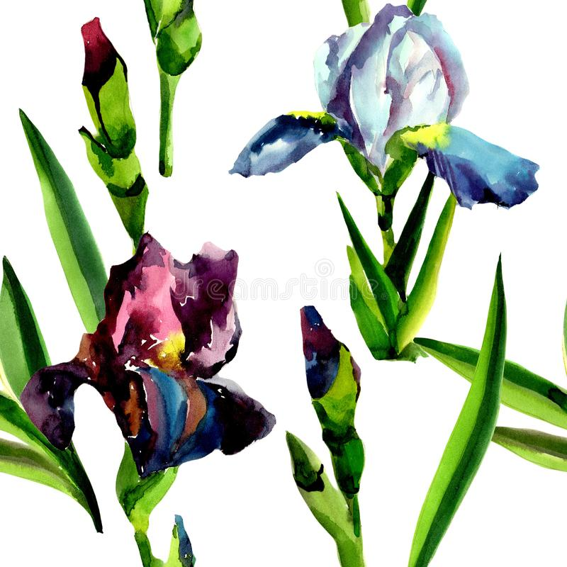 Blue and pink irises. Floral botanical flower. Seamless background pattern. Fabric wallpaper print texture. Aquarelle wildflower for background, texture stock illustration