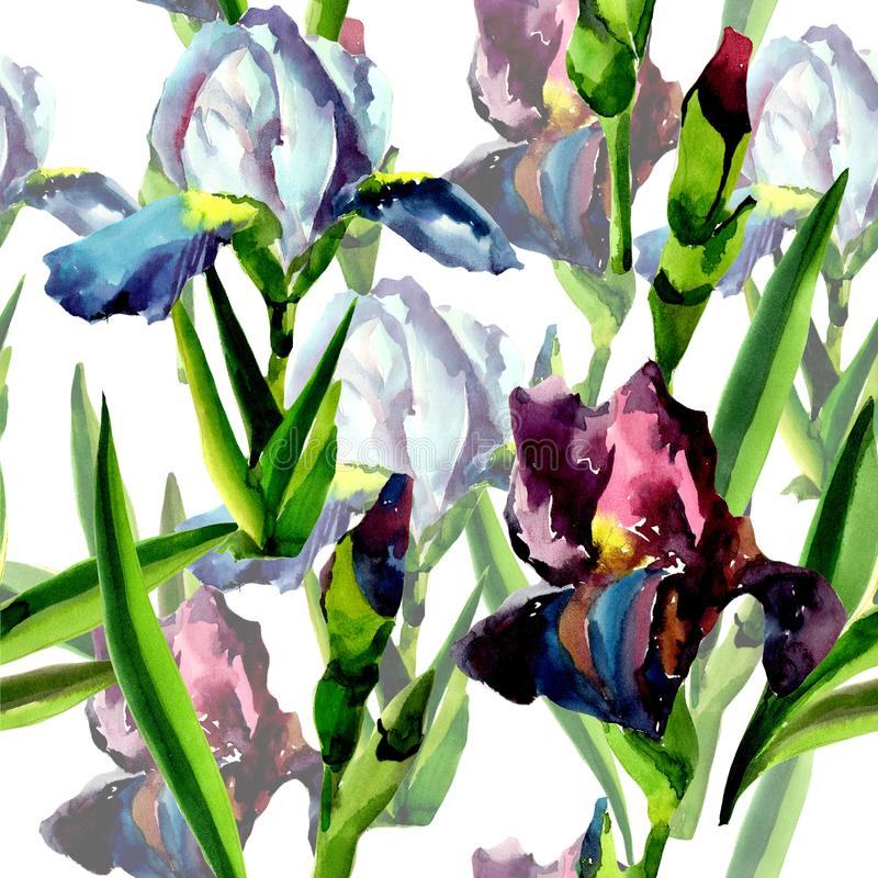 Blue and pink irises. Floral botanical flower. Seamless background pattern. Fabric wallpaper print texture. Aquarelle wildflower for background, texture royalty free illustration