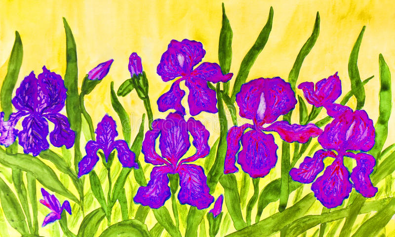 Blue-pink irises. Hand painted picture, watercolours, flower bed with many blue, pink and purple irises on yellow background vector illustration