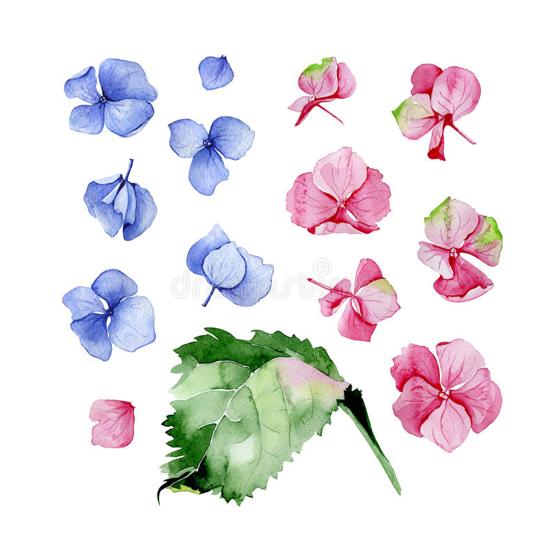 Blue and pink watercolor hydrangea floral design set. royalty free illustration