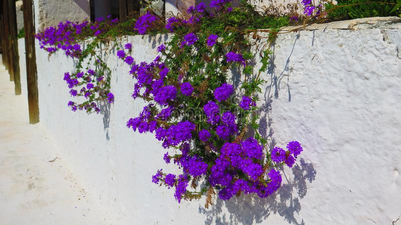 Blue plant against white wall royalty free stock photo