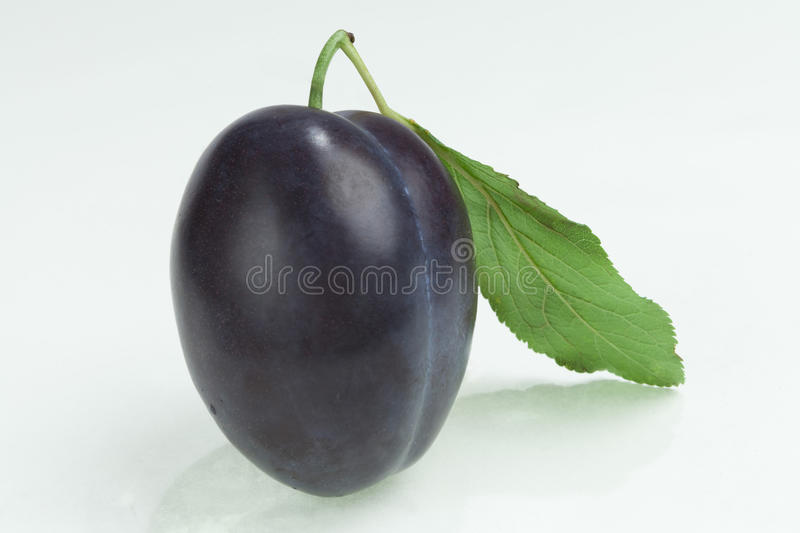 Blue plum berry royalty free stock photos