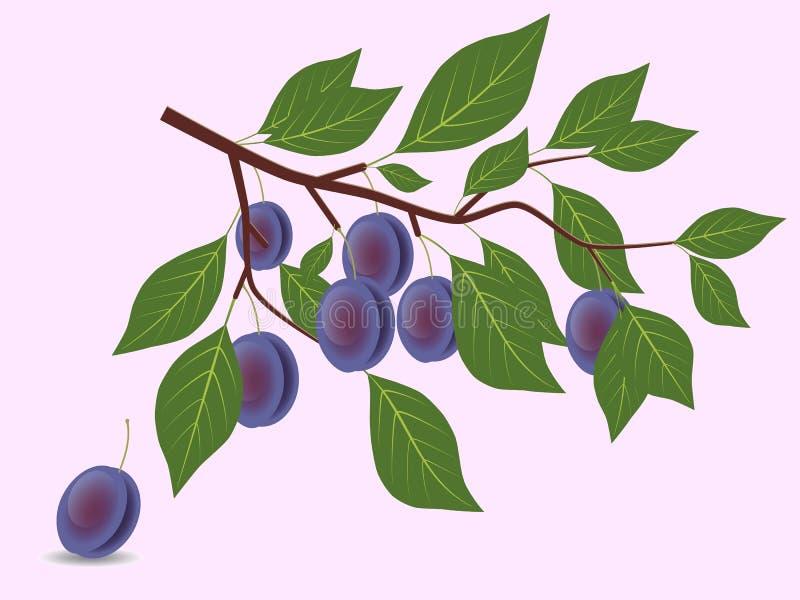 Blue plum branch royalty free illustration