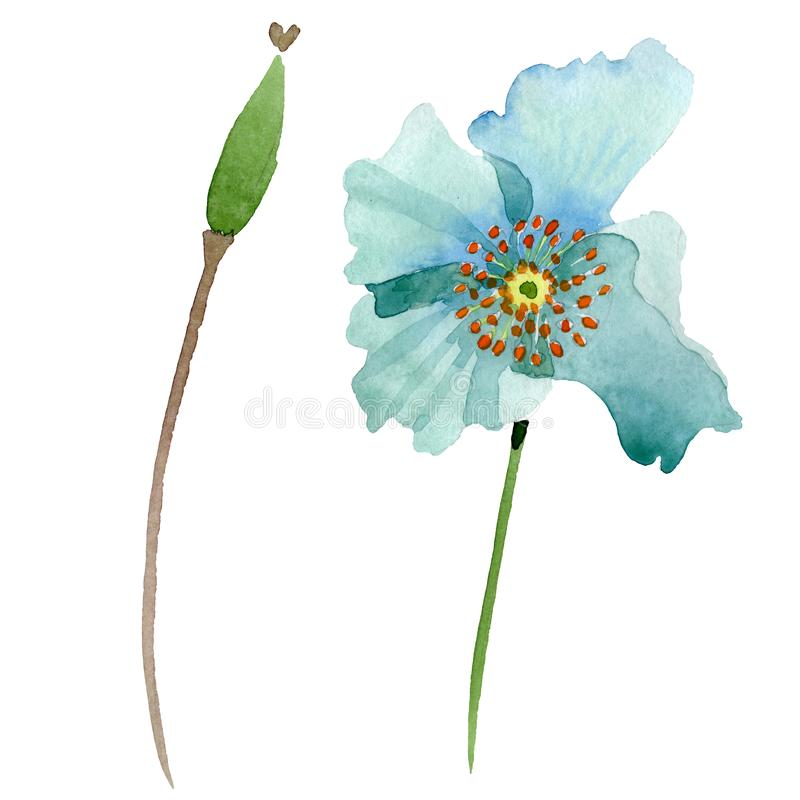 Blue poppy floral botanical flower. Watercolor background illustration set. Isolated poppies illustration element. vector illustration