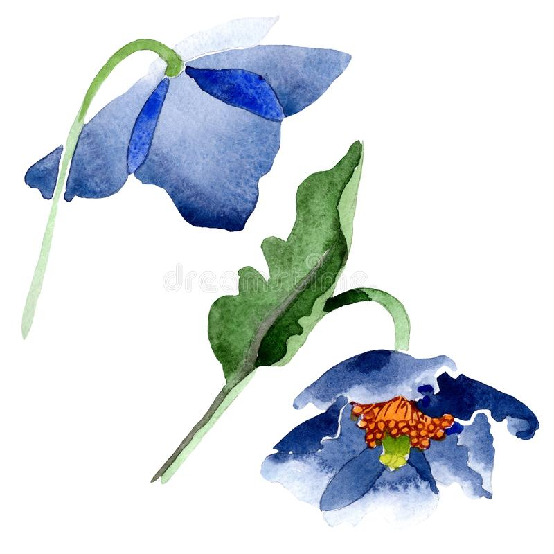Blue poppy floral botanical flowers. Watercolor background illustration set. Isolated poppis illustration element. vector illustration