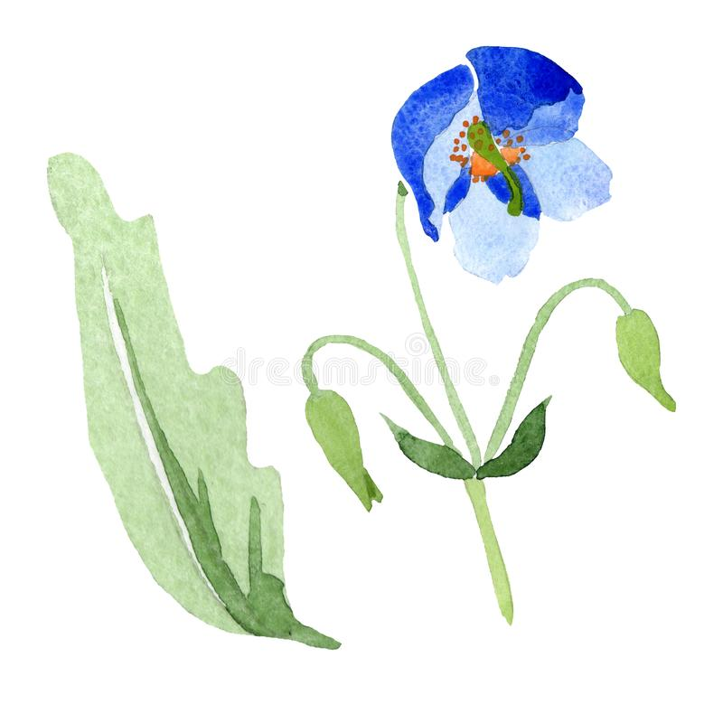 Blue poppy floral botanical flowers. Watercolor background illustration set. Isolated poppies illustration element. stock illustration