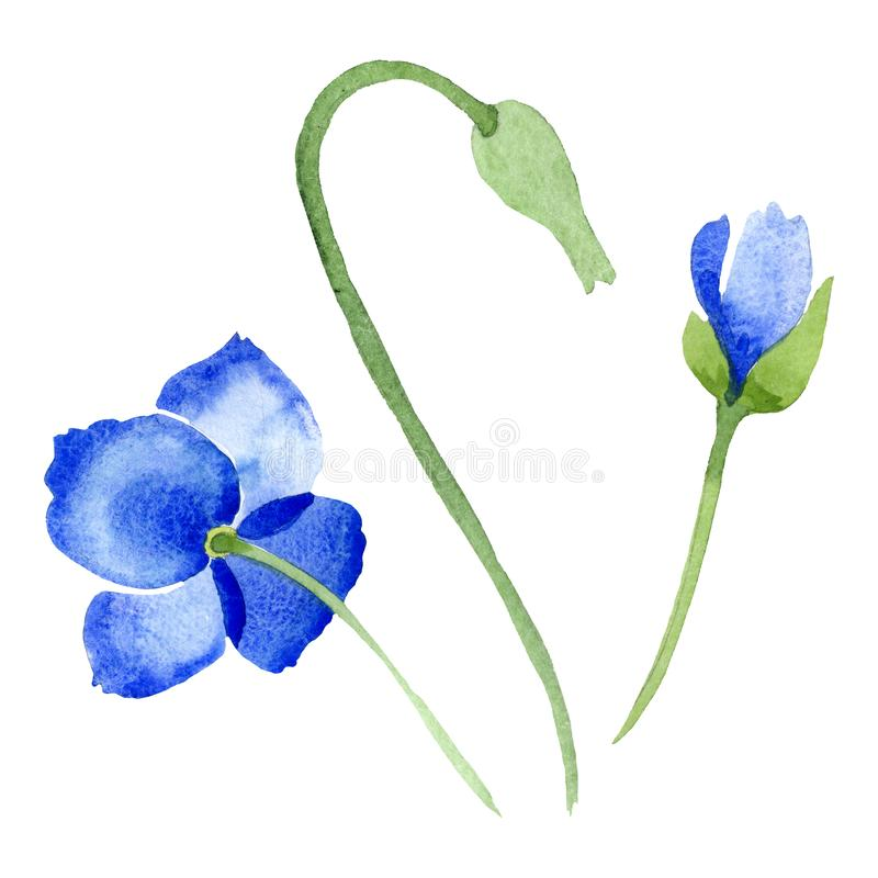 Blue poppy floral botanical flowers. Watercolor background illustration set. Isolated poppies illustration element. vector illustration